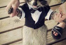 Cute Raccoons !