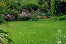 """LA PIETRA ROSSA - GARDEN / Pictures from my garden in Sardinia's South-East corner. An """"english-mediterranean"""" garden, as visitors are used to call it :)"""