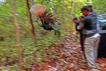 Wildlife releases