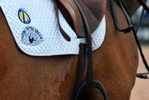 Equestrian things <3  / by Chloe Laurent
