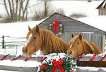 Horses  / by Sandie Kilian