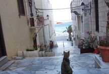 Syros: The cat island