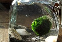marino moss balls