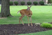 Visitors in Our Yard