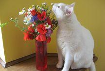 Zwierzątka - animals: cats & dogs / kotki, pieski - nasi  mali ulubieńcy: słodkie kociaki, rozbrajające psiaczki, i mądre pieski i kotki chodzące swoją drogą.....