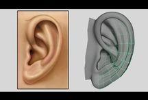 3D Modeling - The Ear