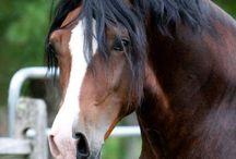 horses ♡♡