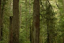 Nanaimo Day Trips / Nanaimo is a great base camp to explore the rest of Vancouver Island