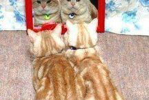 Cats: It's all in the Attitude