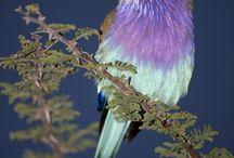 Birds are dreams in flight / by Caroline
