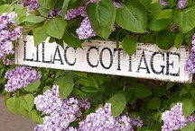 Cottages Names and Signs / I have a web page about brainstorming a name for a cottage. http://www.squidoo.com/cottage-names-ideas