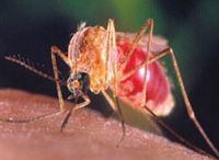 Mosquito Control in Rhode Island
