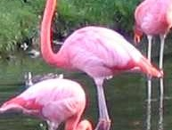 Flamingos / by Terry Peters