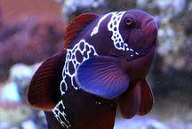 Ryby, obojživelníci - Fishes, amphibian / Ryby, obojživelníci, fishes, amphibian, sea, moře