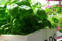 Garden - Herbs & Veg