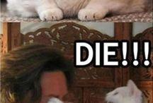 Poze cu animale Amuzante Cu Animale
