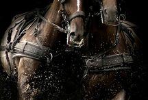 Atlar Hayvanlar