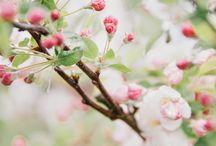 spring inside