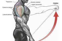 Muskel. 5