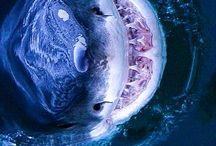 sharks n whales