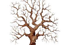 strom - rodokmen