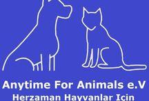 Anytime For Animals - Herzaman Hayvanlar Için / Tierschutz in der Region Side/ Manavgat in der Türkei