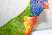 Parrots / My Parrot Mio