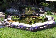 In The Garden / by Teresa Del Rio