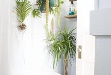 ○• Badkamer decoratie / Ideeën de badkamer een warme fijne sfeer te geven.