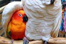Papağanlar / Dayanamadım pinledim.