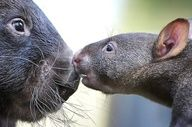 Wombats / Wombats