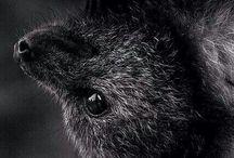 Bats♥