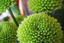 Flower Photos / by Stems Florist