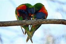 Love Birds / by Chloe Gates