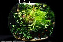 bottle aquarium