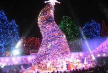 Hollywood Christmas Trees
