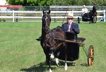 I Love Driving My Horse / by Charlene Hornbaker Mulcahy