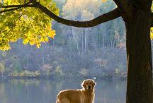 Golden autumn  / Die Reize des Herbstes: Das Licht ist unvergleichlich schön, die Bäume leuchten mehrfarbig und die Luft ist zwar kälter, aber dafür frisch. Lange Spaziergänge machen jetzt richtig Spass.    Herbstfotografie: Buntes Herbstlaub, Landschaften in stimmungsvollem Licht oder Nebel. Lassen Sie sich inspirieren und fangen Sie die bunten Herbstfarben mit Ihrer Kamera ein. Machen Sie den schönsten Herbst-Schnappschuss!