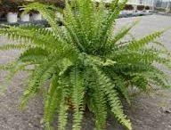 Bytove rastliny