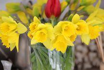 Wiosna 2014r. / foto