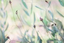 In my meadow