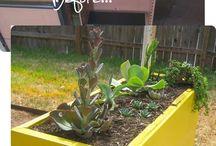 Re-Purposed Planters