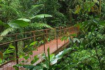 Costa Rica Feb 2014 / by Melinda Kelley