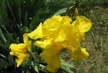 Flower Gardening / Flowers Gardening
