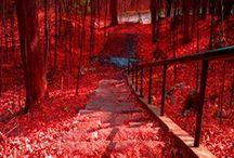 RED / by Amanda Crocker