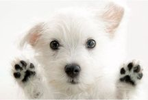 """House Calls Pet Sitting / """"It is Ruff in a kennel...  House Calls is the Purr-fect choice!"""" Loving pet care in your home 364 days a year!  Pet Sitting since 1981 and yes we are bonded and insured.  Visit our website http://housecalls4pet and read our reviews!"""