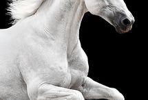 Course Cheval blanc
