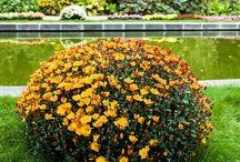 Kwiaty / Opis i zdjęcia wszystkich kwiatów świata