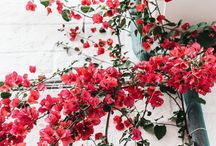 •Fleur•