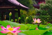 Visit Japan / Story guides for a storied adventure to Japan
